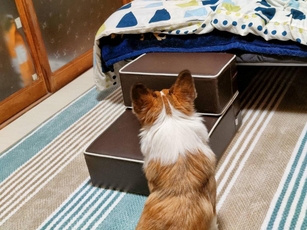 【ドッグトレーナー監修】ドッグステップ ハグワン ペット ステップ 階段 犬の階段 (ブラウン)